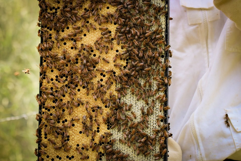 The Roles of the Honey Bees