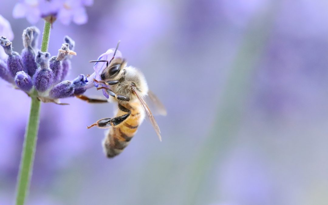 5G is Killing the Bees