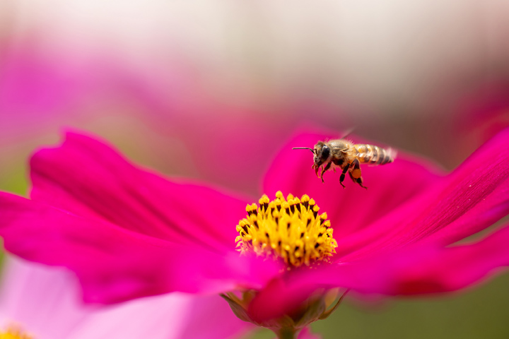 Pesticides are Killing the Bees (And Possibly You)