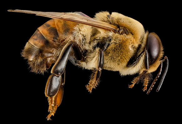 Bees Are Awesome!